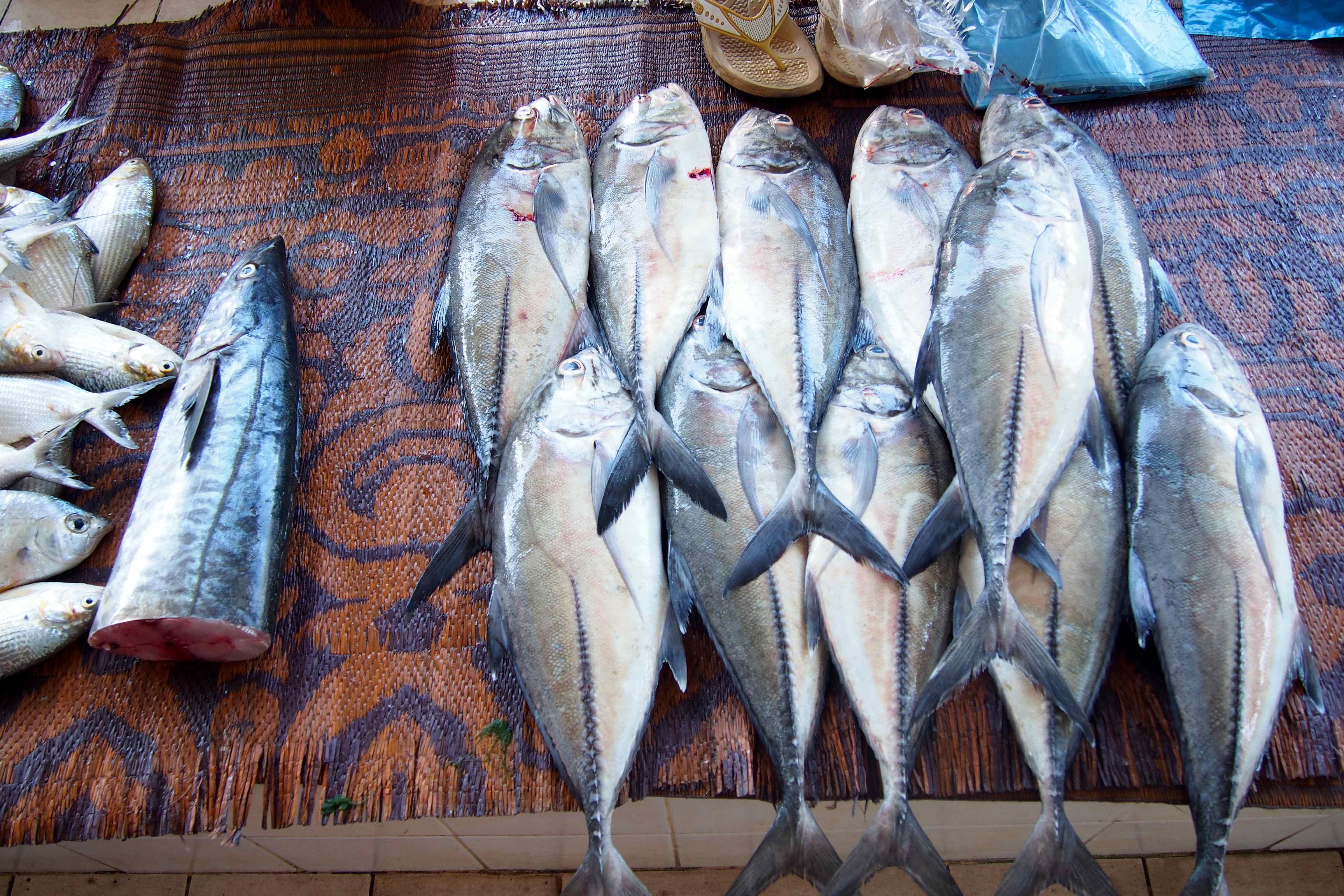 Magico oman - Pagina di colorazione del pesce ...