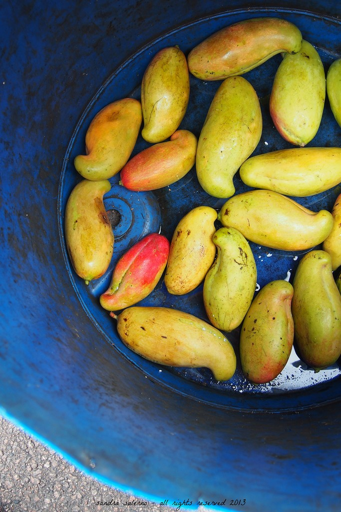 Mangoes at Victoria's Market (Mahè Island) Seychelles