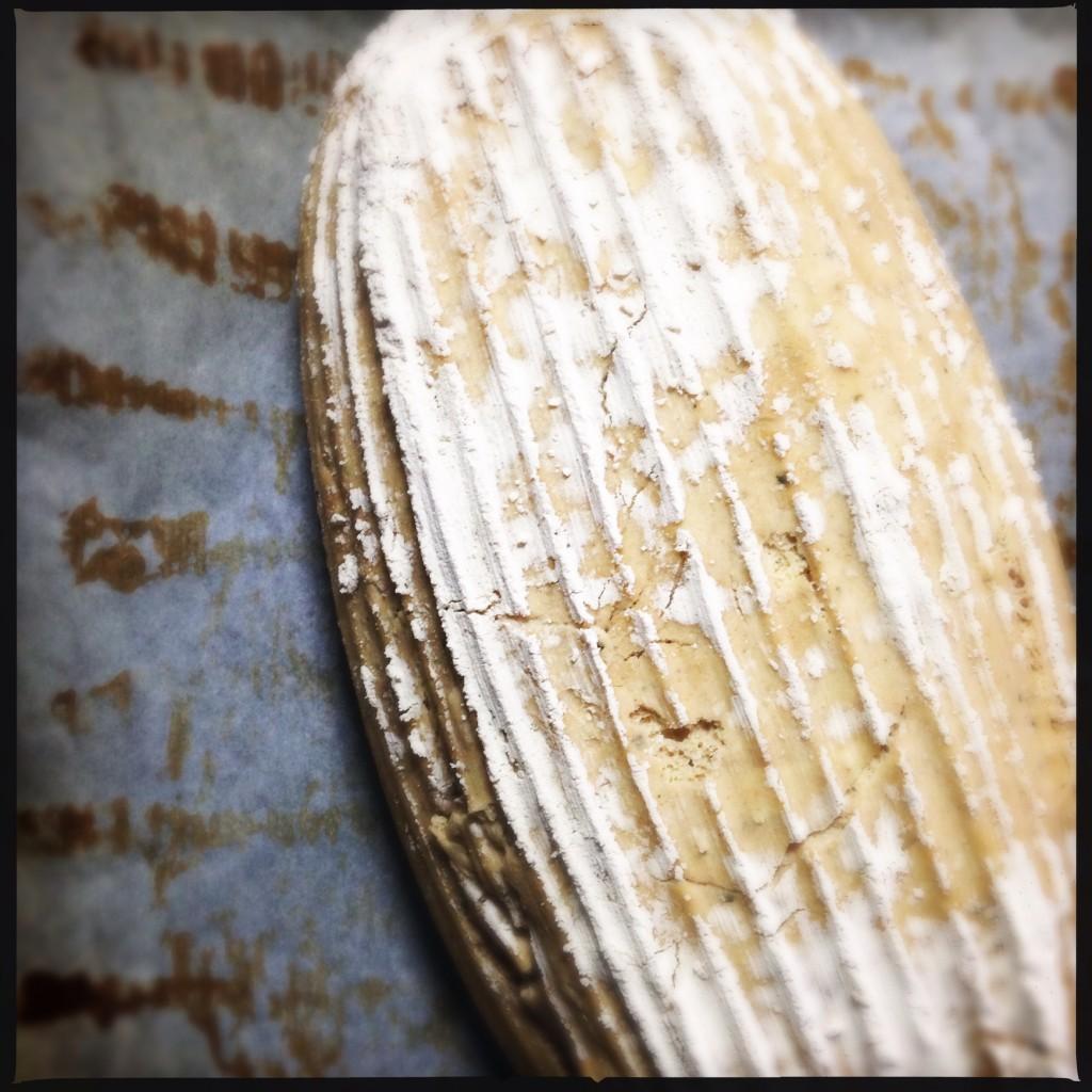 Prima della cottura [Enkir, farina di  Quinoa]