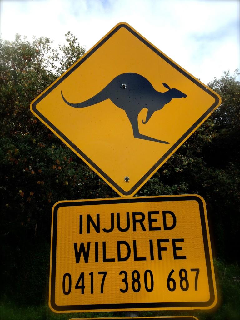 Cartello stradale occhio al canguro