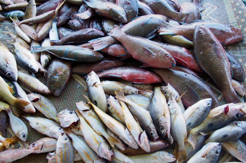 Mercato-del-pesce-Muscat