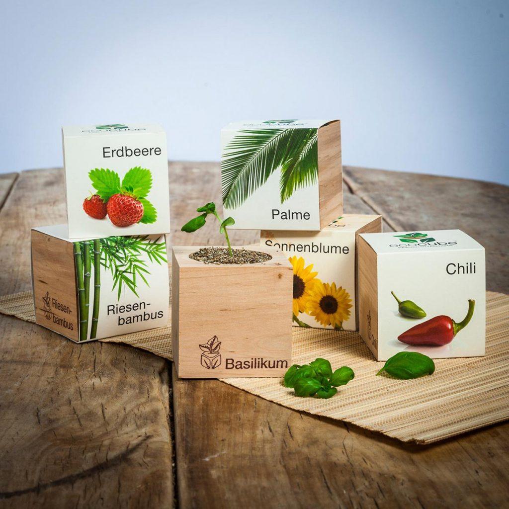 Eco-cube, piante in cubi di legno